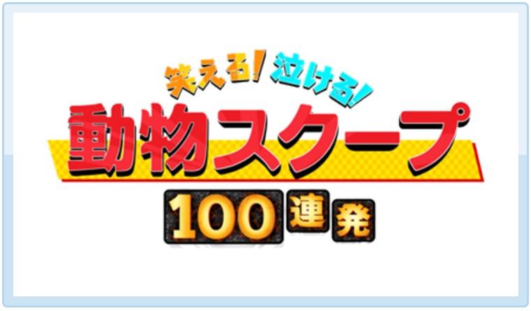 笑える!泣ける!動物スクープ100連発