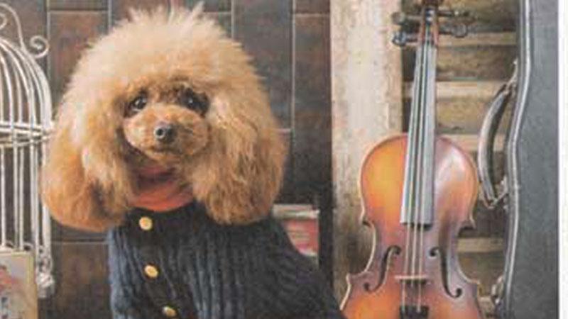 トイプードル モデル犬