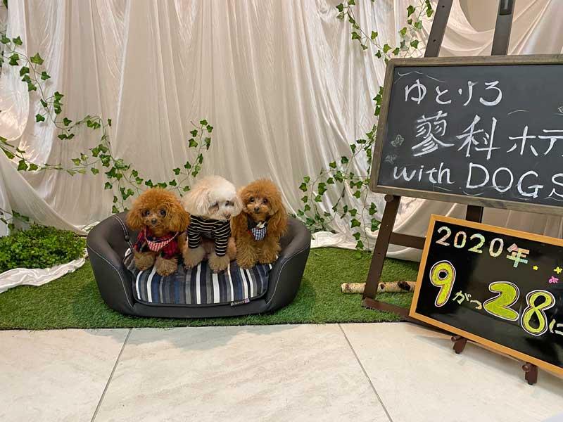 トイプードルとティーカッププードルと蓼科ホテルwith dog