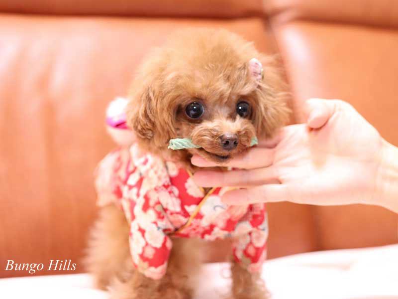 鬼滅の刃のコスプレモデル犬